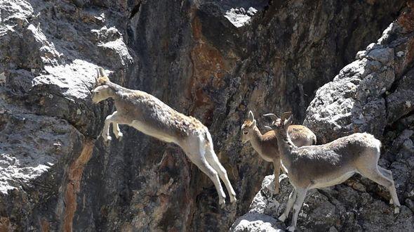 Экологи со всего мира посетили национальный парк 'Истоки трех рек' в провинции Цинхай