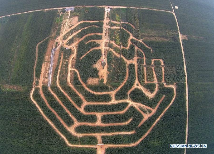'Кукурузный лабиринт' в провинции Хэбэй