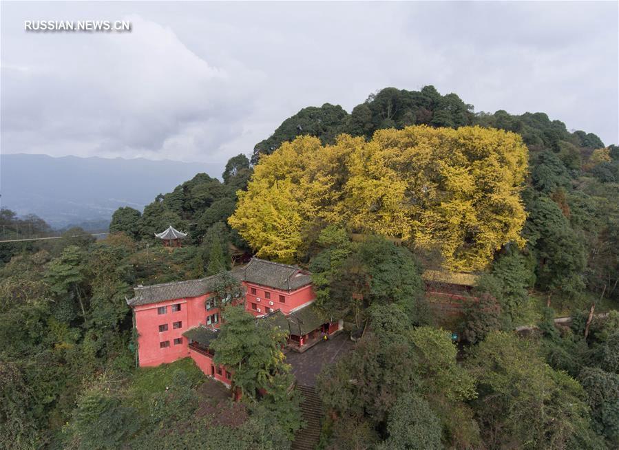 'Древо стелет золотой ковер' -- Осень в горном монастыре в провинции Сычуань