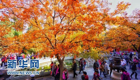 Парк Сяншань -- идеальное место для любования красными осенними листьями в Пекине