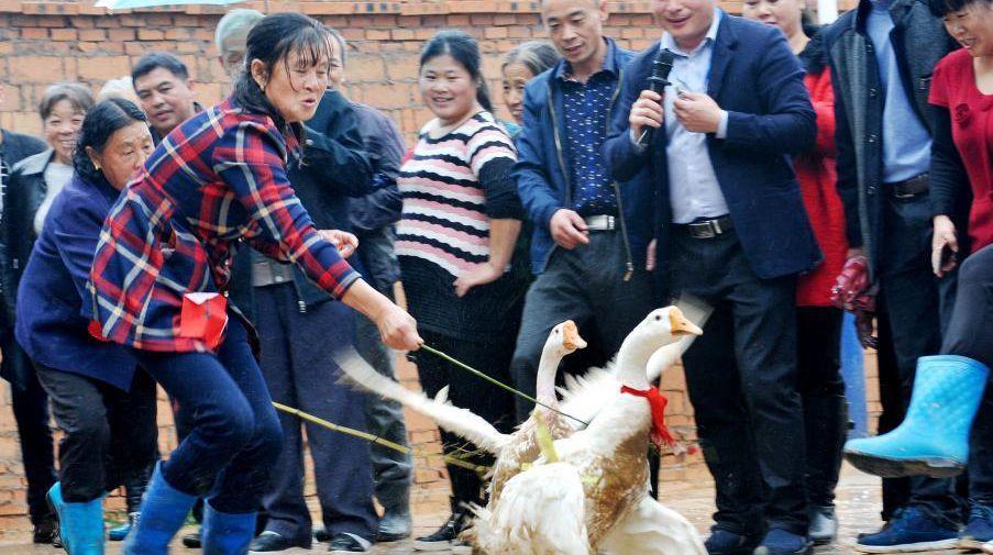 В поселке провинции Цзянси провели гусиные бега