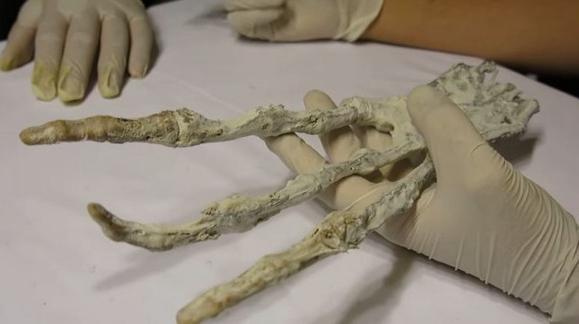 Тайваньские СМИ: в пещере Перу обнаружили руку загадочного существа с тремя пальцами