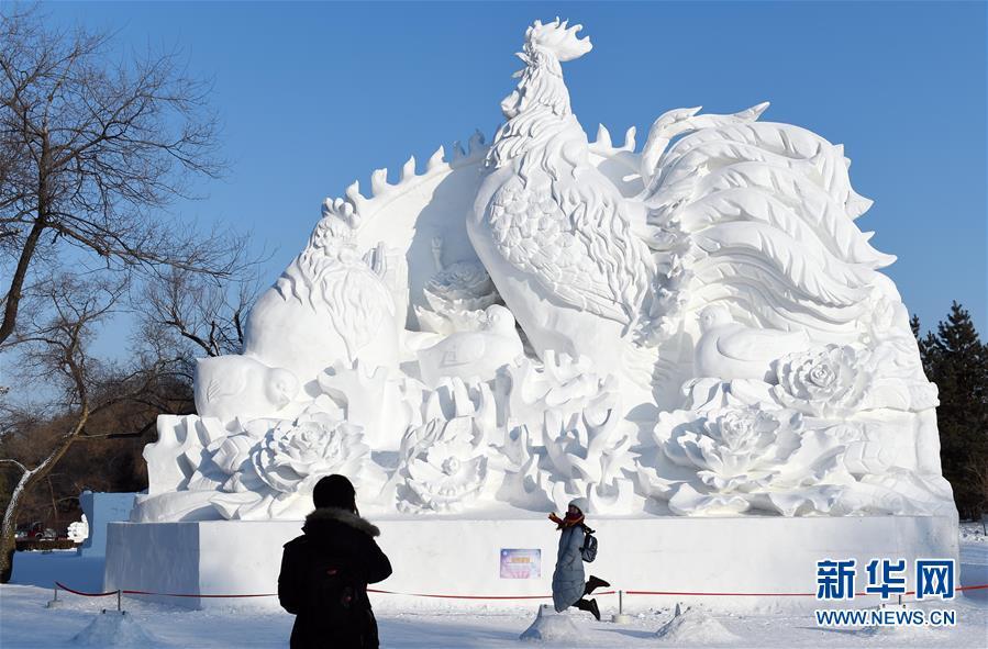 С приближением Праздника Весны и года Петуха по лунному календарю, во всех крупных парках ледяных скульптур в Харбине популярность у туристов завоевывают ледяные скульптуры, посвященные петуху.