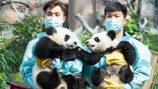 Новогодние поздравления от медвежат Цзяньцзяня и Канкана