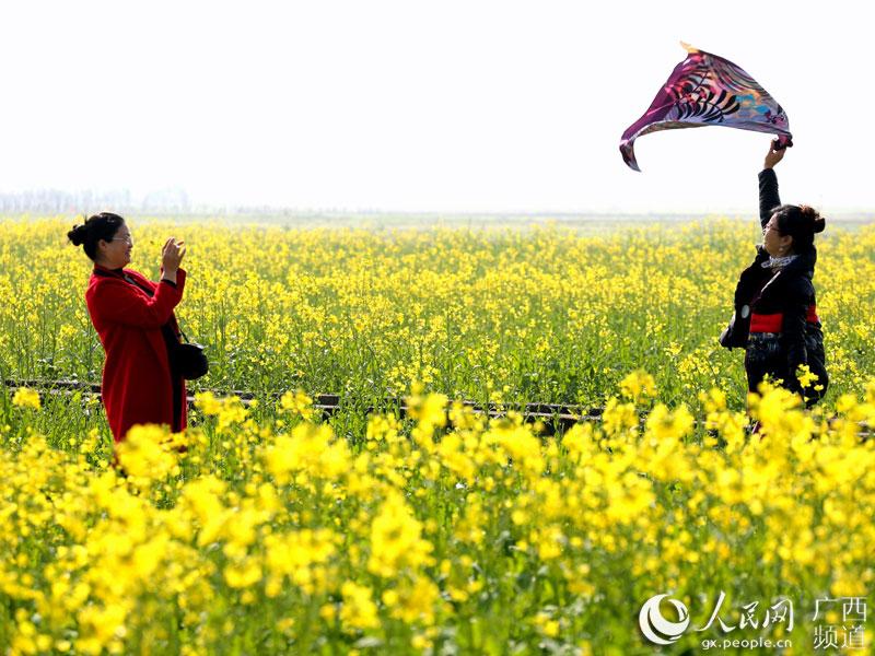 Рапсовое поле в Гуанси