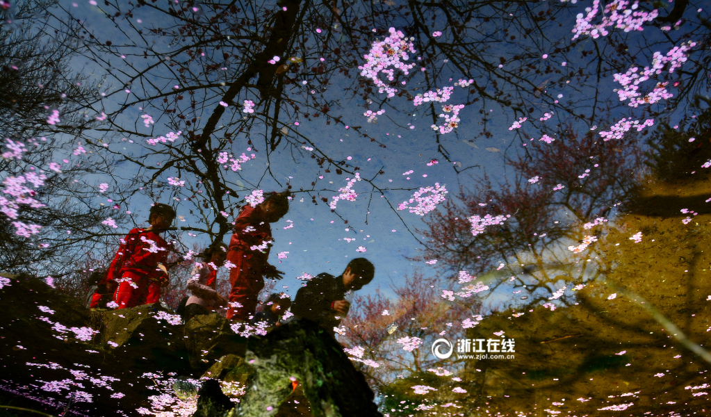 В городе Ханчжоу зацветают абрикосы