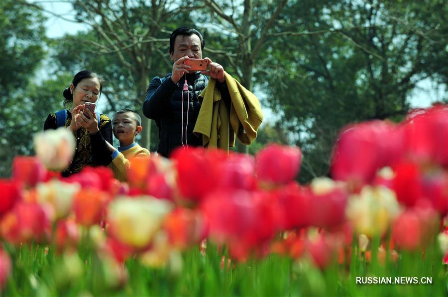 Весеннее море цветов в Наньчане