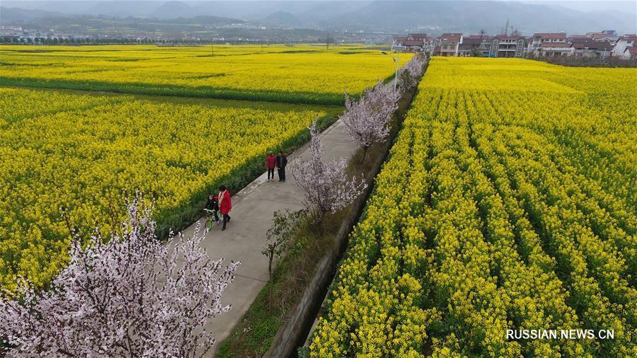 Море цветов у горы Тяньданшань