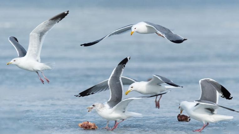Китайские и российские жители приграничья обьединились для охраны окружающей среды и защиты диких птиц