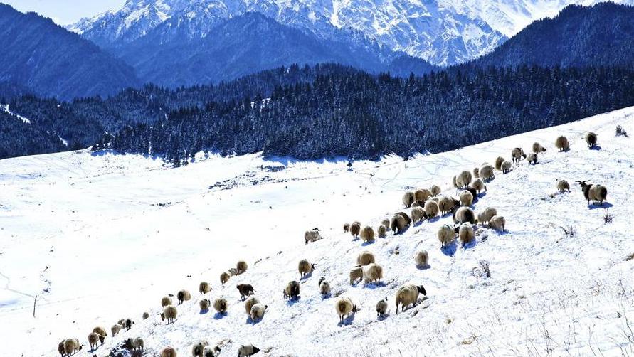 Снег в горах Циляньшань
