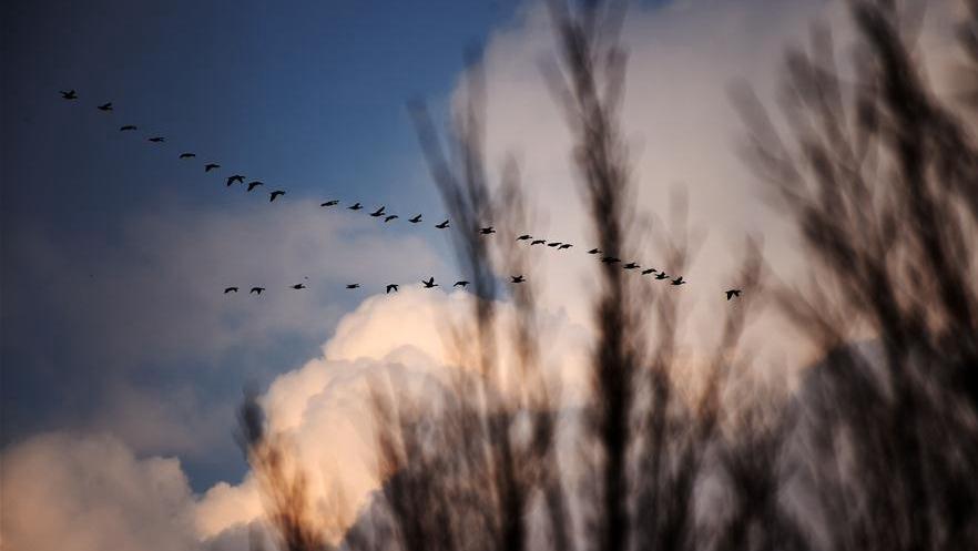 Стаи перелетных птиц возвращаются в северные края