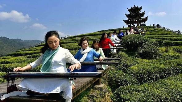 Звуки гуциня на чайной плантации