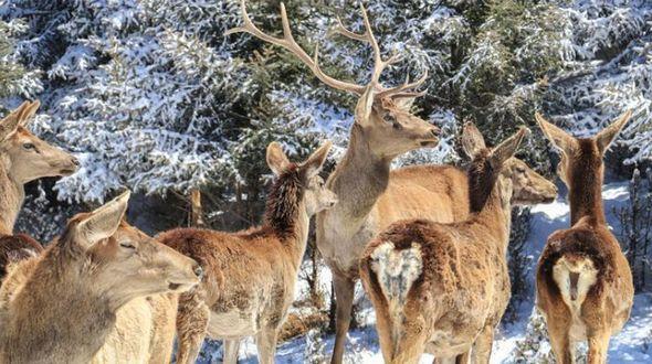 Степь Сунань в провинции Гансу стала «царством зверей» после снега