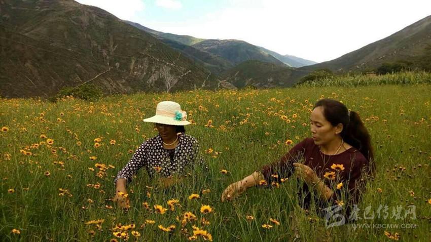 С помощью «Интернет+» товары из тибетских районов реализуются по всей стране