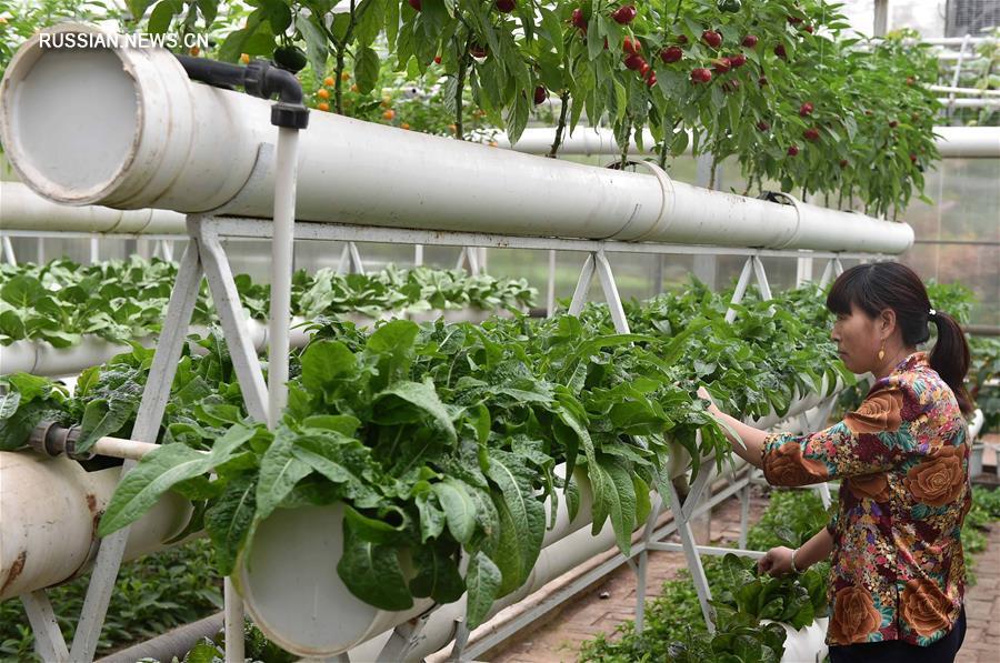 В Шоугуане открылась 18-я Китайская международная овощная научно-техническая выставка