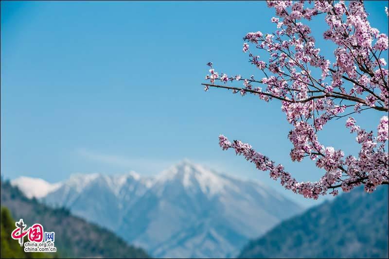 Красивая сакура на ледяной горе Дагу