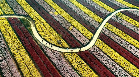 Море цветов на древнем Шелковом пути