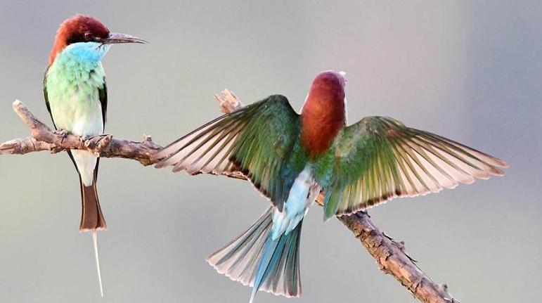 китай фото птицы