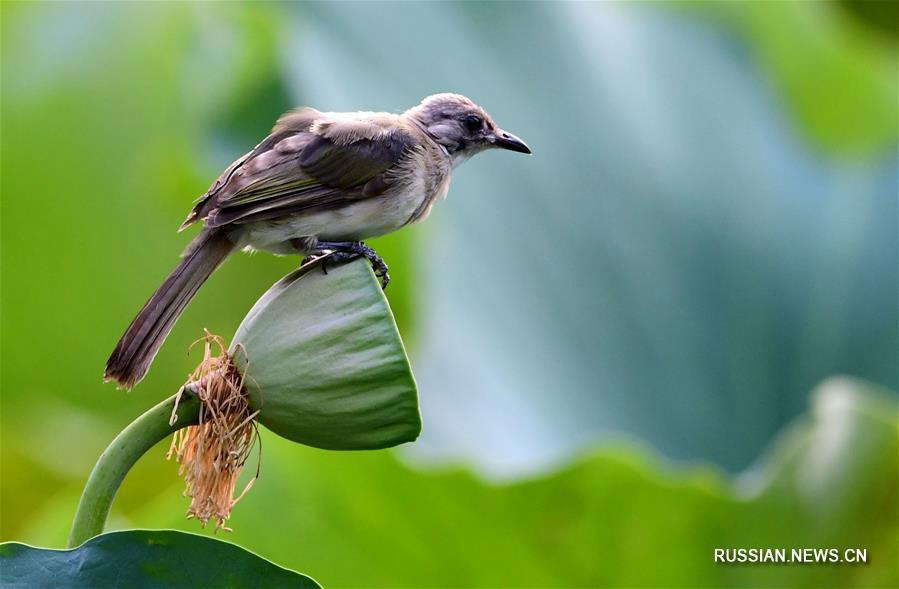 Летняя гармония цветов и птиц в парках Фучжоу
