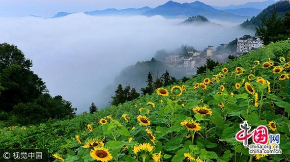 Древнее село у подножья гор Хуаншань превратилось в золотое море