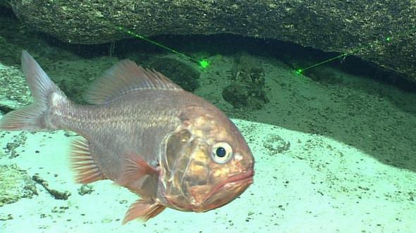 Подводные жители -- Дневник экспедиции 'Кэсюэ'
