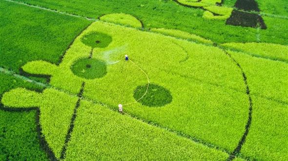 Бум сельского туризма в районе Фуян