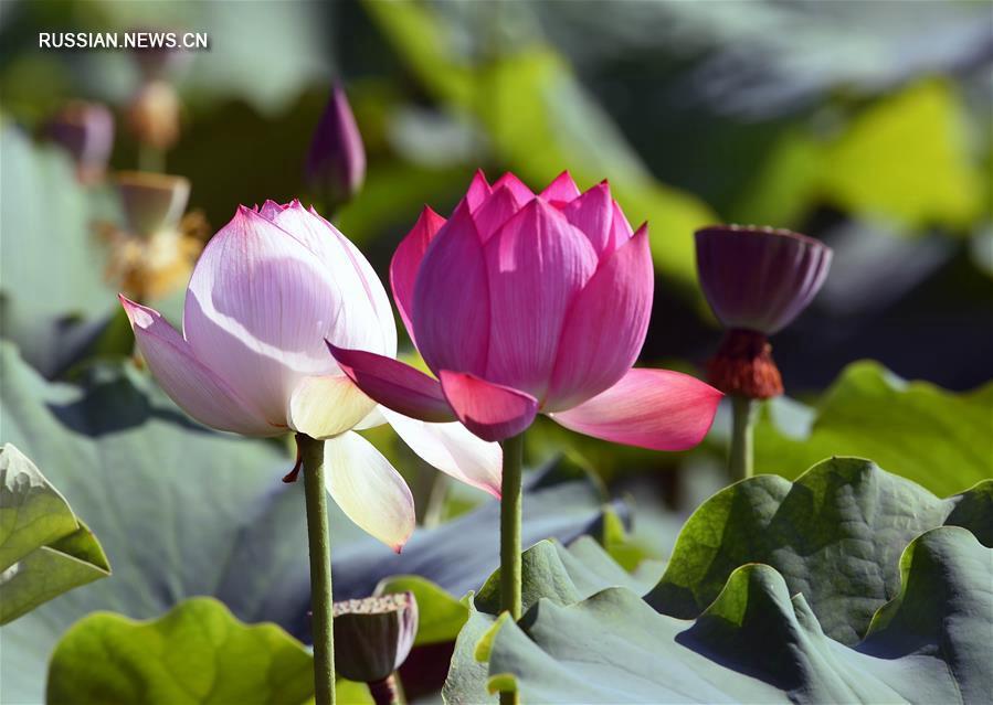 Водный парк Цилинь в Цюйцзине
