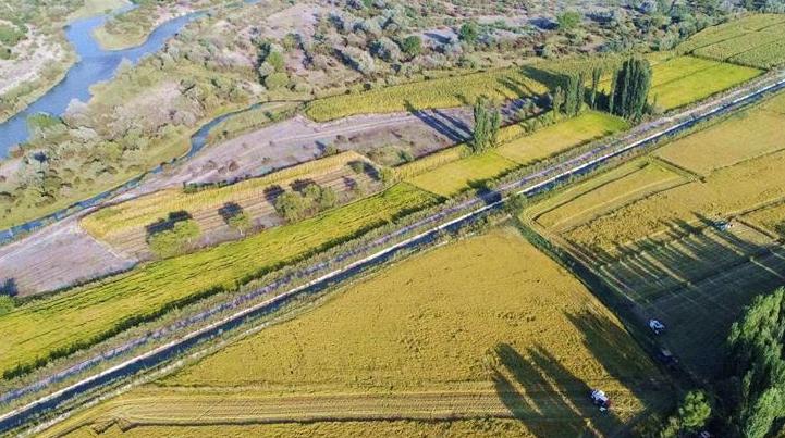 Урожай риса в Или-Казахском округе на северо-западе Китая