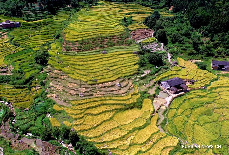 Осенний облик террасных полей в уезде Цюаньчжоу