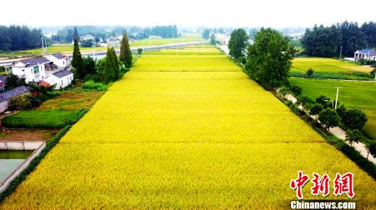 Золотая осень в древнем городе Янчжоу совсем как на картине
