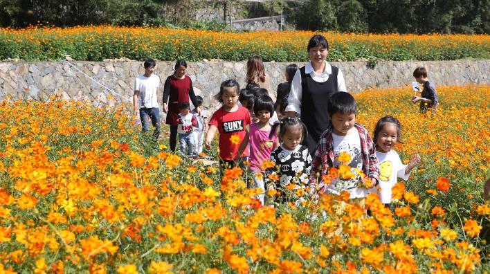 Уезд Дэцин: бывший пустой холм превратился в море цветов