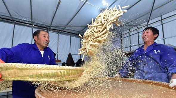 В г. Иу своим способом выжимают бурый сахар