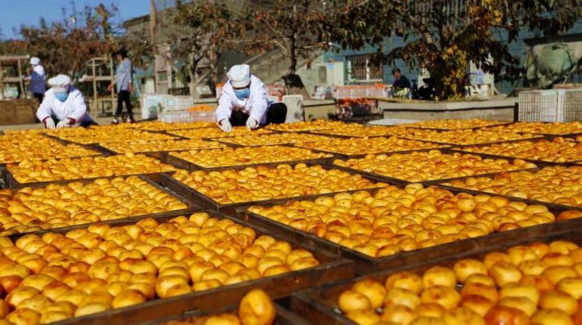 Производство сушеной хурмы в уезде Инань