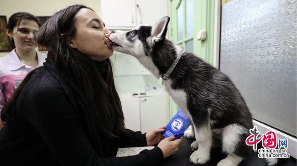 «Усатые» пациенты на приеме в московской ветклинике