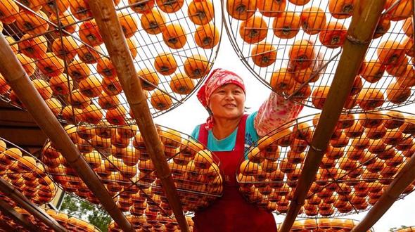 Экскурсионное хозяйство по производству сушеной хурмы на Тайване