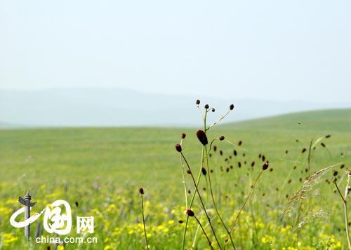 Las praderas más atractivas de China2