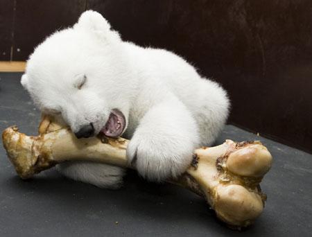 Магазин плюшевые медведи купить в Москве Топ цена на