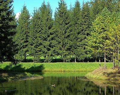Resultado de imagen para bosques artificiales
