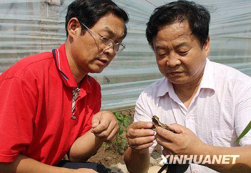 China descubrió letras anteriores a las Inscripciones de Hueso Oráculo2