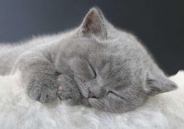 Gatito suave