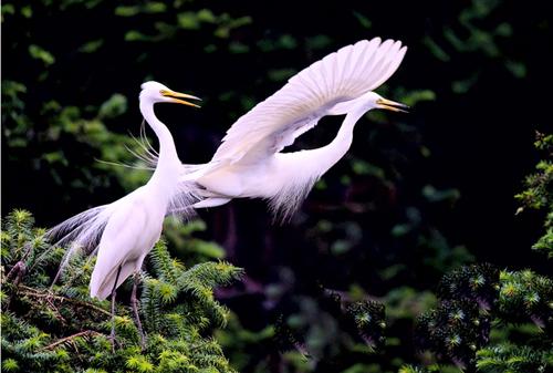Sanya: paraíso para aves y amantes de las aves