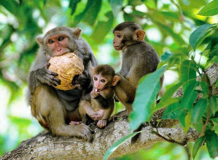 isla monos Nanwan Hainan 1