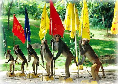 La isla de los monos Nanwan en Hainan