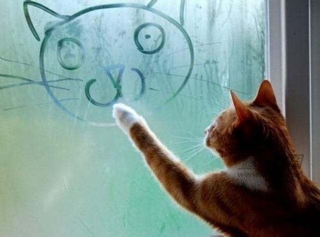 Animales genios