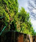 El Parque de Isla de Tres-Héroes en Xiamen