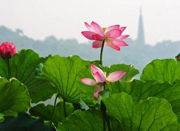 El Lago del Oeste de Hangzhou ,Patrimonio de la Humanidad