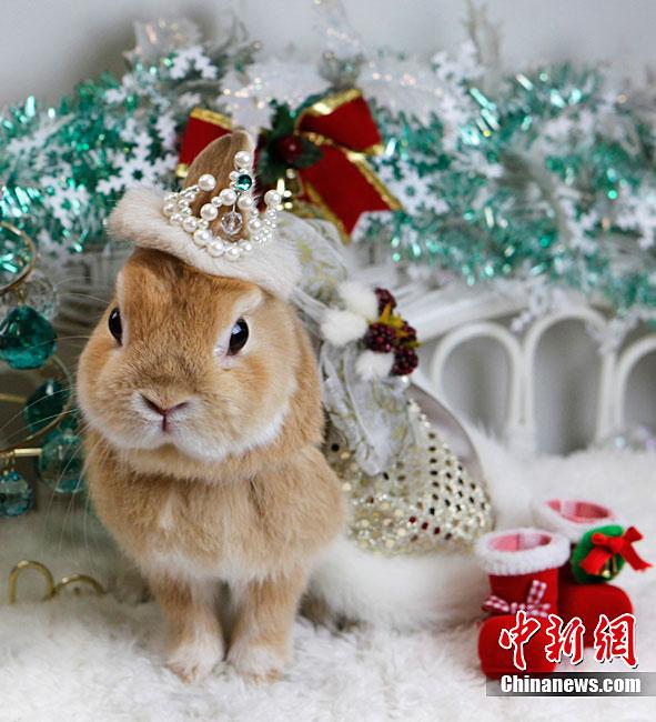 ¡Una muy feliz Navidad para los conejitos!