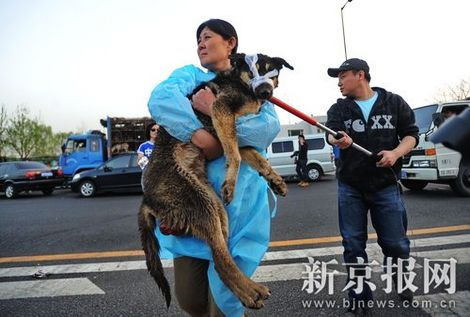 derechos animales, perros, Jilin, Henan
