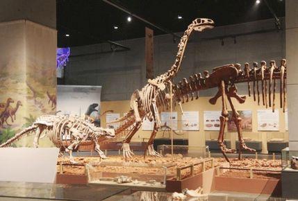 China-Dinosaurio, ciencia, , Zhejiang
