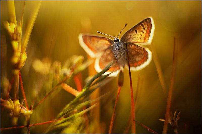 Fotos asombrosas de mariposa 1